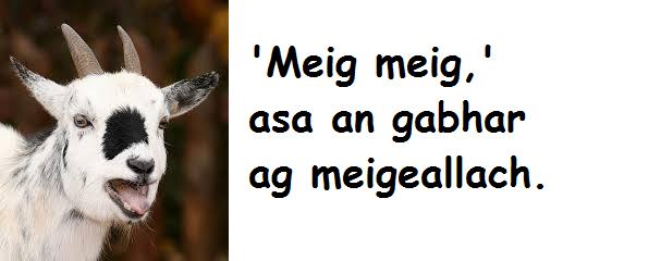 Gabhar meigeallach