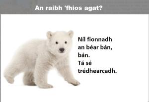 DidUKnow polarbear