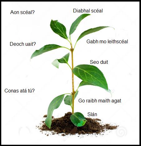Grow Gaeilge 2
