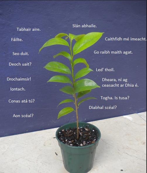 Plant Gaeilge