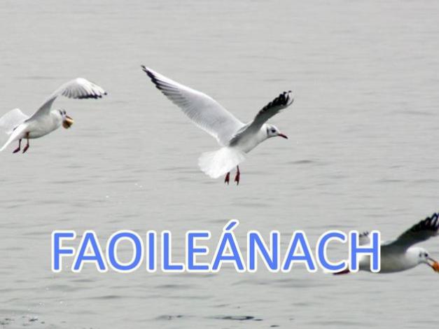 Faoileánach